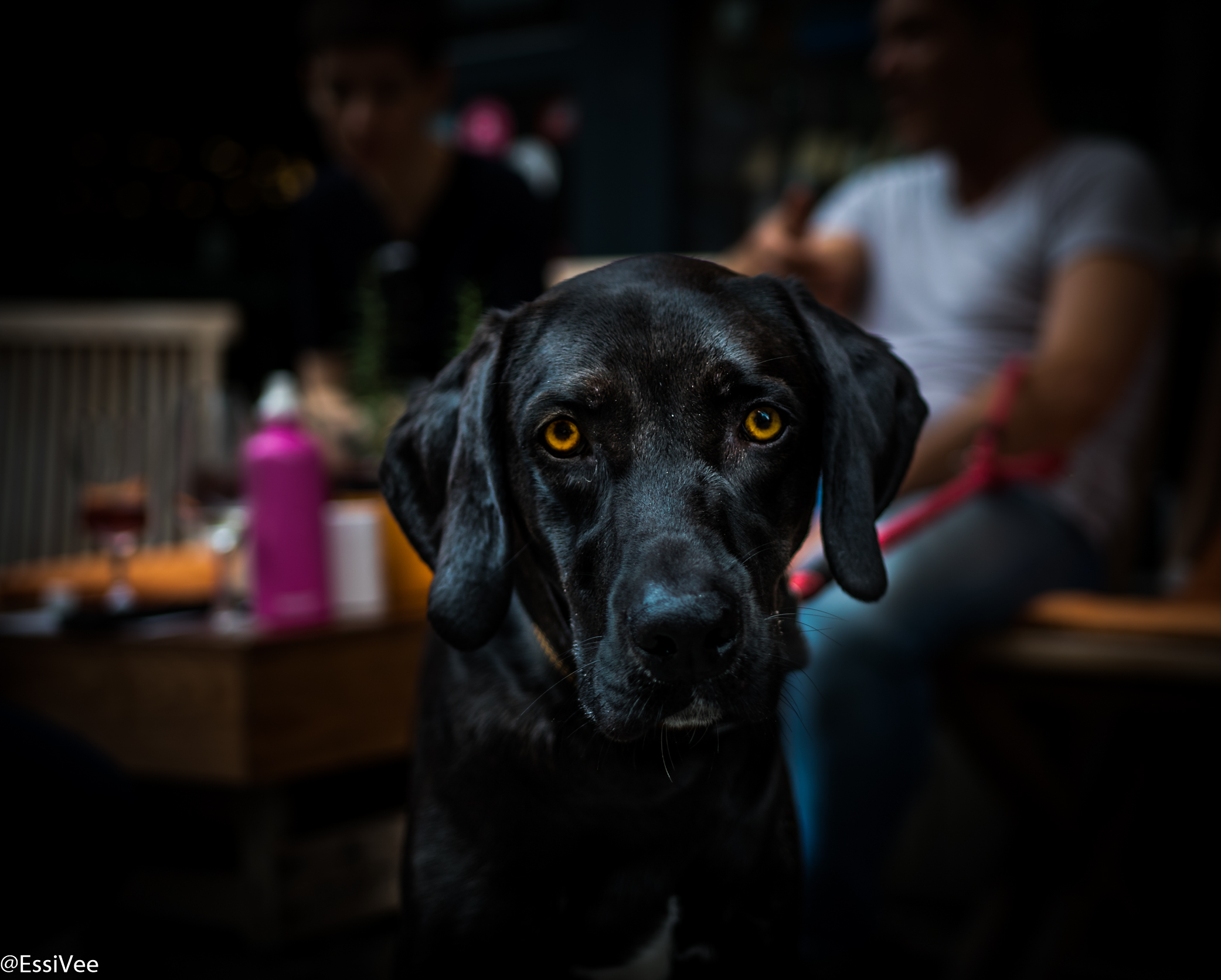 koirakuvaus koira
