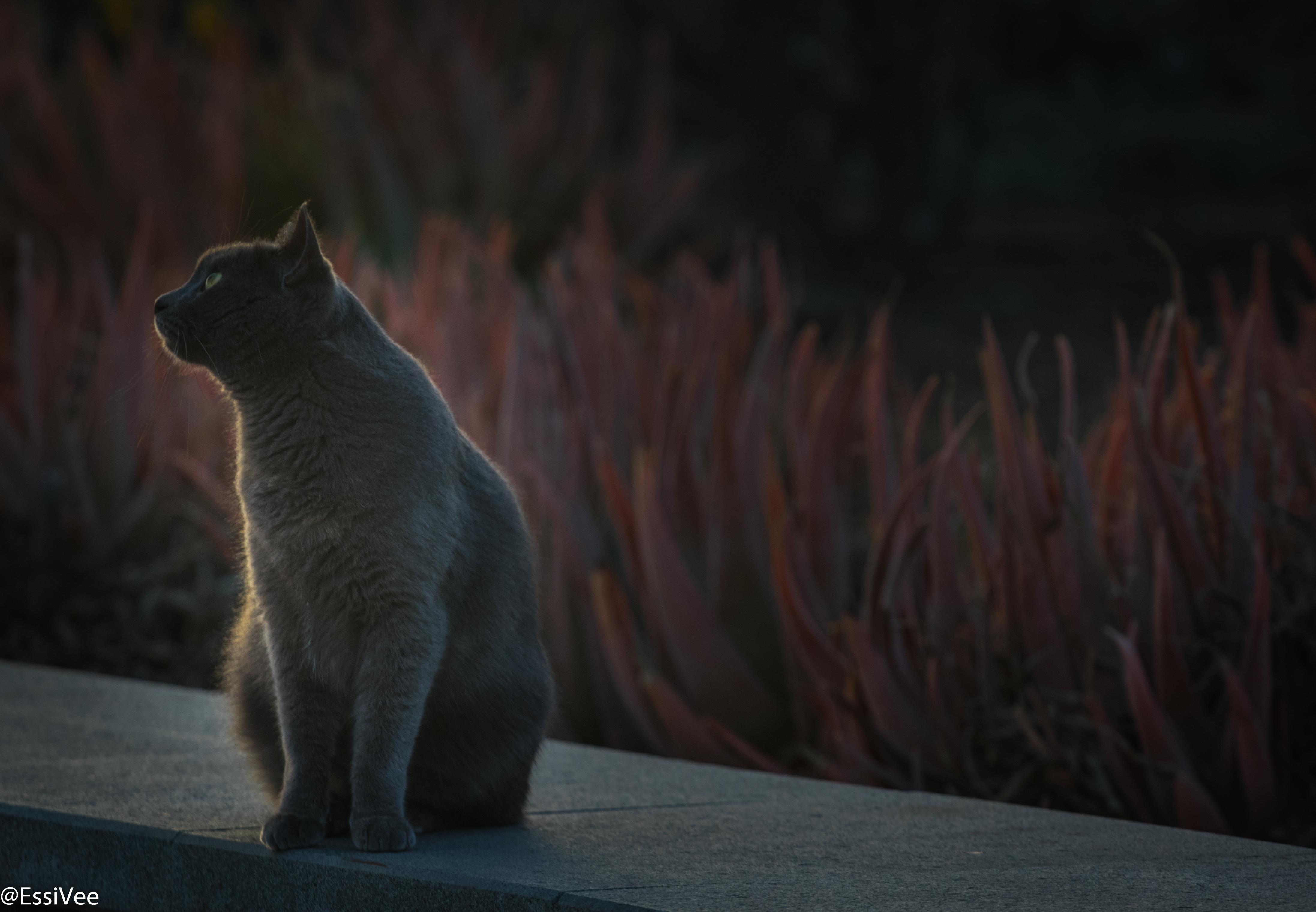 kissa iltavalo kissavalokuvaus