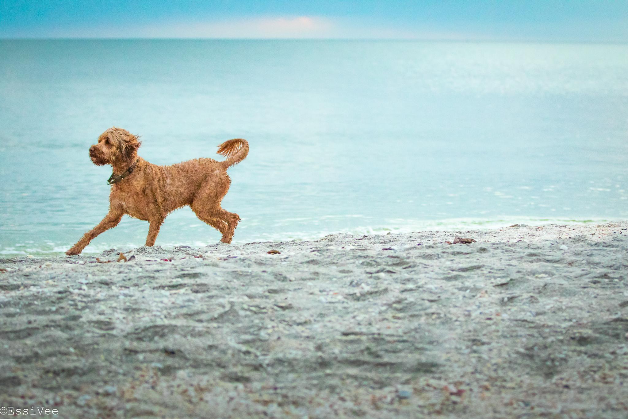 koira ranta koiravalokuvaus