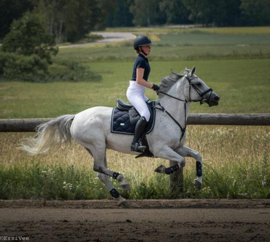 ratsastus ratsastuskilpailu kisakuvaus estekilpailu kunniakierros harrastus hevoskuvaus